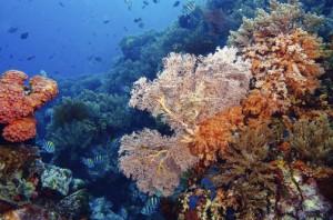 laut-bunaken