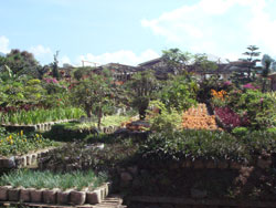 bunga-cihideung