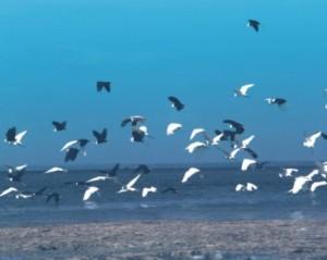 Burung migran dari Siberia yang singgah di Taman Nasional