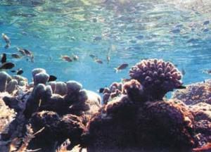 dasar-laut-bunaken