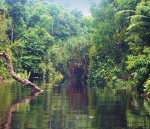 Hutan Rawa Air Tawar di Ait Hitam Dalam