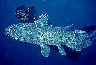 Ikan Purba Coelacanth dan Maskot WOC