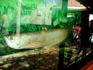 akuarium raksasa di purbalingga