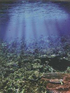 Geliat Wisata Bawah Air Belitung Timur
