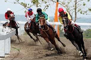 Serunya Pertandingan Kuda-Kuda Balap Tompaso
