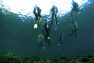 Menyelami Keindahan Bawah Laut Maumere