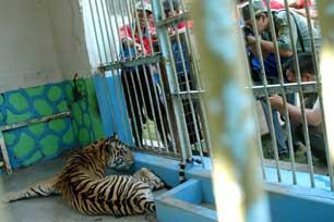 Gembira Loka Bukan Sekadar Kebun Binatang