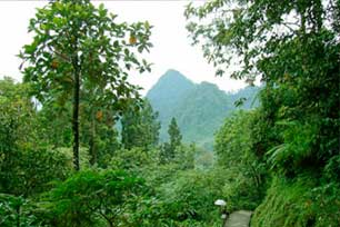 Wisata Ramah Lingkungan di Wana Wisata Baturaden