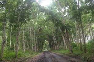 Ayo Menyusuri Taman Nasional Alas Purwo