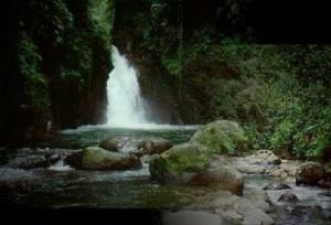 Anak sungai Taman Nasional Gunung Halimun