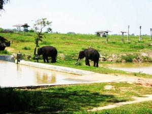 gajah-way-kambas
