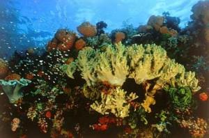 karang-kepualuan-seribu