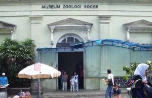 museum-zoologi