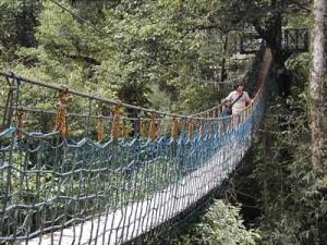 Canopy Trail di Cikaniki