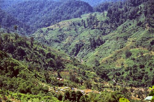 Berpetualang ke Taman Nasional Gunung Halimun