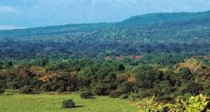 Hutan yang selalu hijau sepanjang tahun