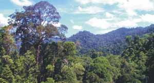 Hutan Taman Nasional Bukit Tigapuluh