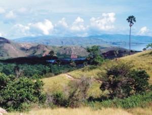 Padang Savana Habitat Komodo