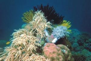 bawah-laut-taman-nasional-cendrawasih