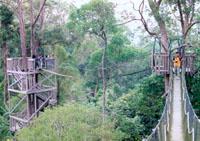 Canopy bridge, andalan wisata alam Bukit Bangkirai  Photo: Yanda, 2003