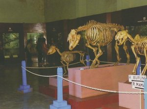 Museum Zoologi Berteman Satwa Nusantara