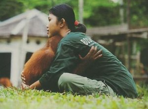 The Borneo Orangutan Survival (BOS) – Kalimantan Timur Menjadi Wisatawan Penyelamat Hutan