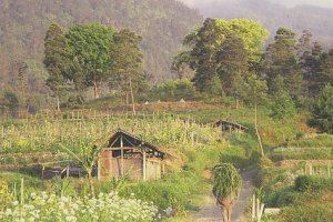 Desa Wisata Kopeng, Semarang – Jawa Tengah Wisata Petik Bunga hingga Hiking