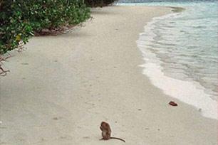 Menikmati Kesunyian Alam di Pulau Peucang